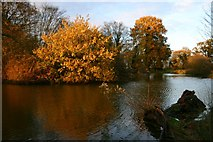 TL8063 : Fishpond at Little Saxham by Bob Jones