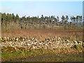 SK2265 : Haddonfields Plantation by John Poyser