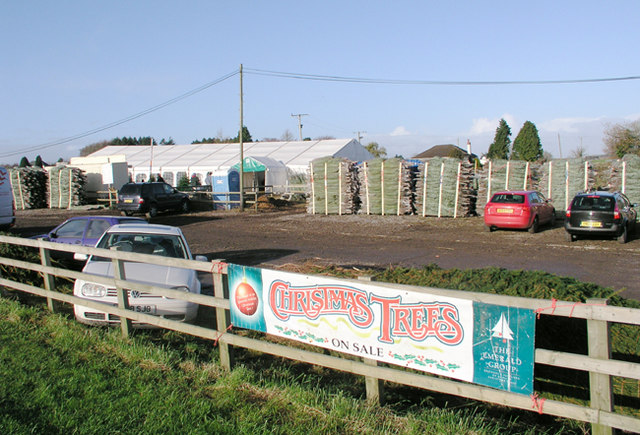 Seasonal  Christmas Tree sales, A48 nr Cowbridge