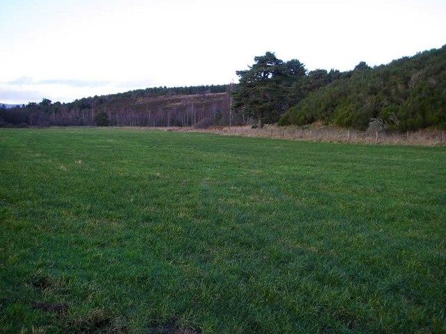 Large field of improved grassland