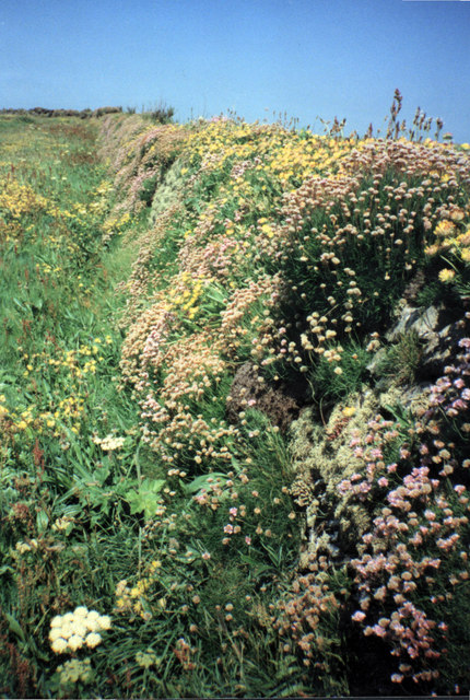 Cornish hedgerow