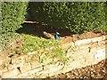 NY6228 : Peacock, Newbiggin Hall by Humphrey Bolton