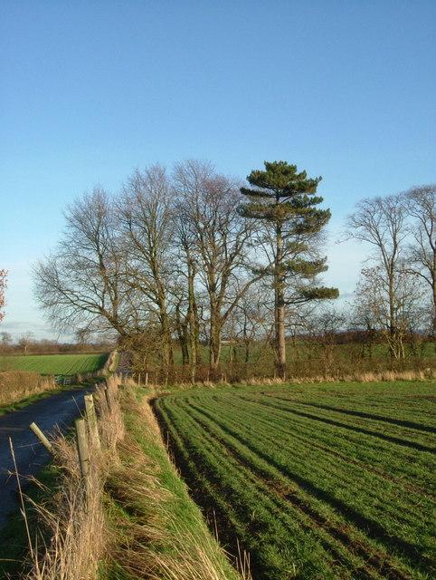 The Elm Spinney, East Farm