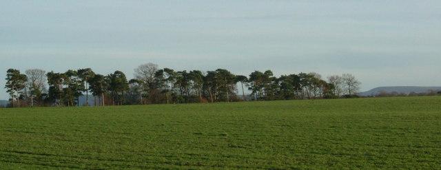 Stell Plantation, East Farm