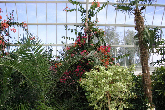 Liverpool Sefton Park Palm House