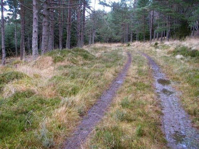 Track through Scots pine plantation