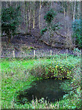 TQ4210 : Small Pond, Malling Down Nature Reserve by Simon Carey