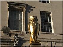 SE2934 : Golden Owl. by Steve Partridge