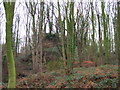 SK3743 : Overgrown Remains of Horsley Castle by John Poyser