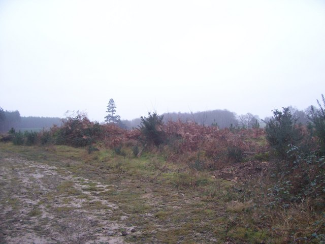 Sussex Border Path outside Liphook