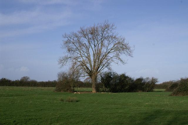 Field on Sedgemoor