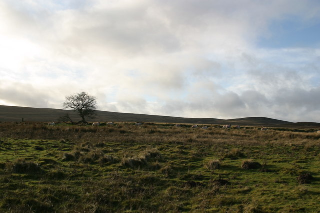 Rough pasture west of Corsenside road-end
