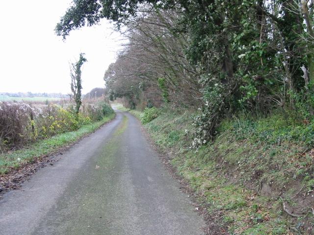 Lane at Western edge of Sangrado's Wood.