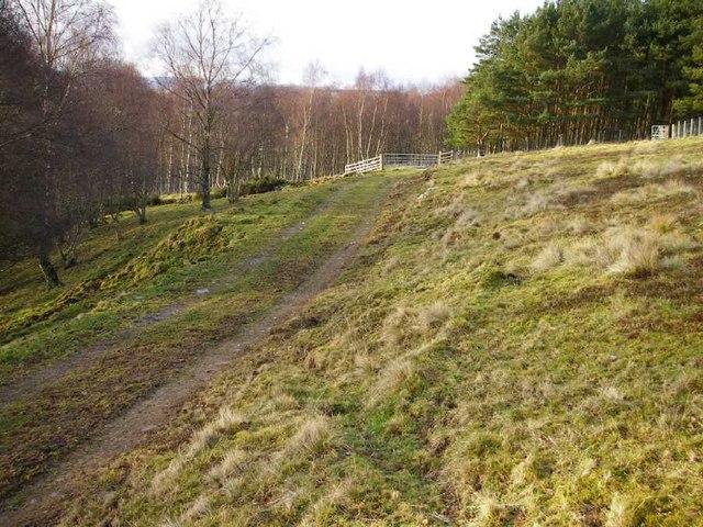 Farm track, sheep pasture and woodland