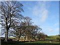 NU1000 : Trees by the lane to Hope by Derek Harper