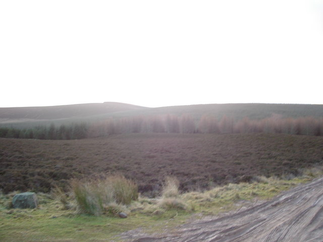 Heather moorland and forestry looking towards Hill of Fernyhirst.