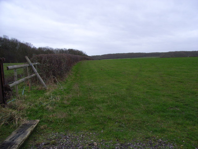 Mather Wood in the distance