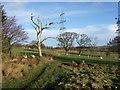 NU1001 : Laneside scene below Woodhead by Derek Harper