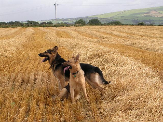 Ballyfatten Barley Field Guards