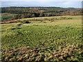 NU0900 : Looking towards the Black Burn valley from near Healey by Derek Harper