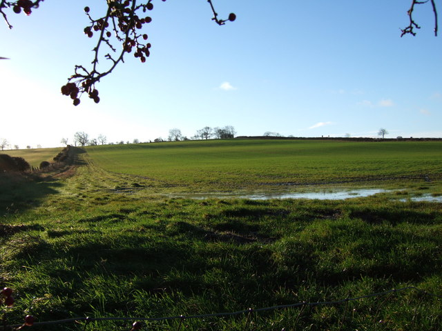 Field at Hedleywood