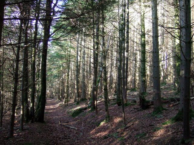 Little Treffgarne Woods