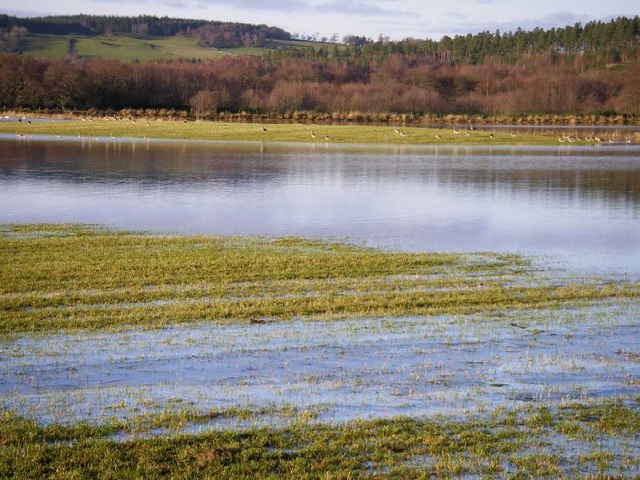 Flooded pasture by River Spey with wild geese