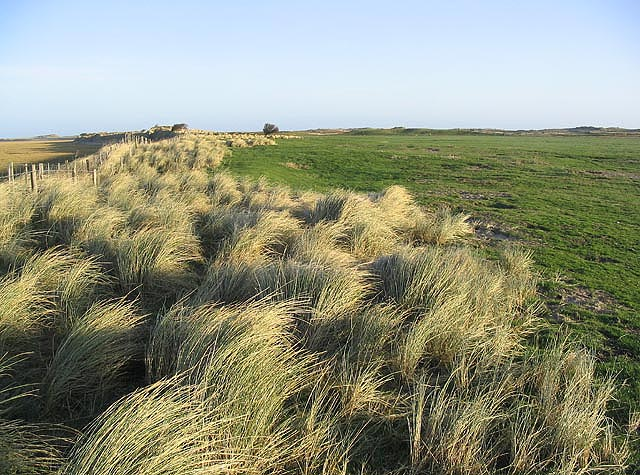 Marram grass and grazing field