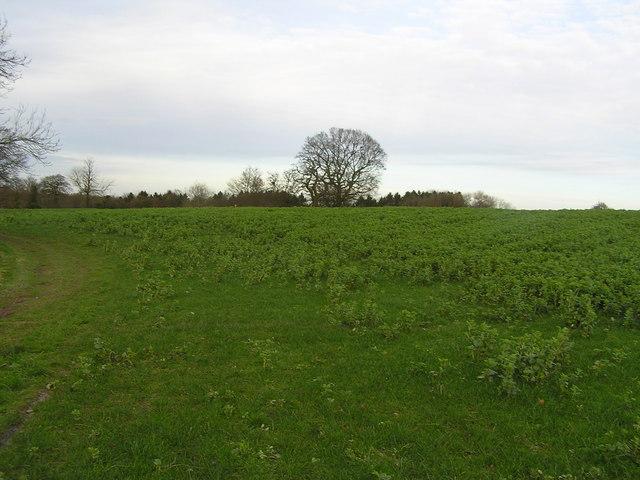 Woodland at Teddesley Hay and Staffordshire Way