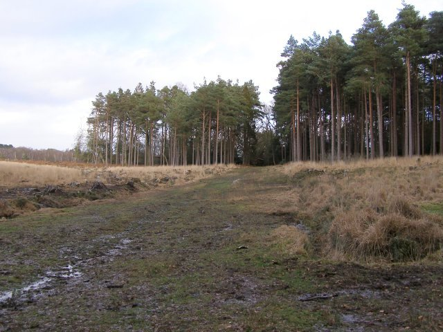 Cleared area in Highland Water Inclosure, New Forest