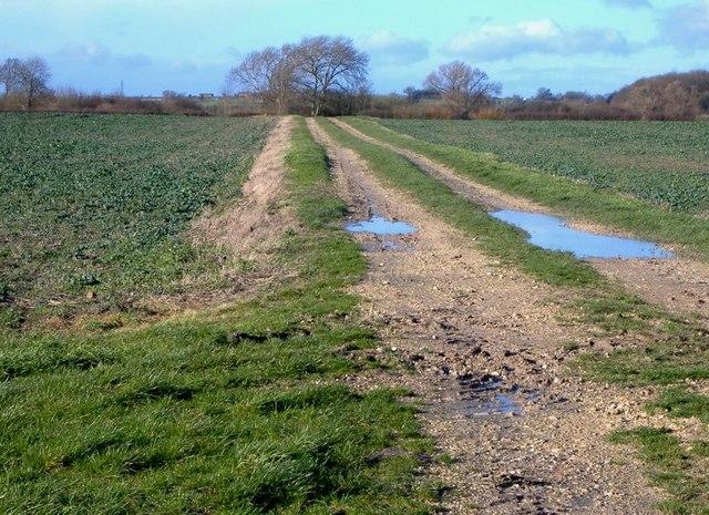Fields west of Cheddington
