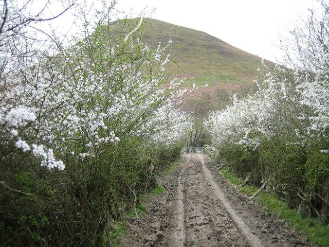 Hawthorn lane