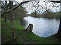 SO0053 : Wye valley walk in early spring by Colin Heyman