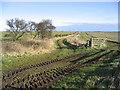 NU1831 : Farm tracks by Walter Baxter