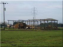 TL7604 : Horses Grazing at Levetts Farm by Malcolm Reid
