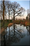 TL8063 : Tree reflections by Bob Jones