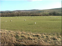 NN9539 : Pasture Land by Dave Fergusson