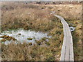 SU9584 : Boardwalk through the mire, Burnham Beeches by David Hawgood