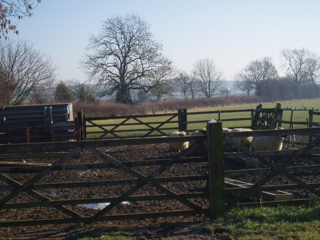 Public Footpath towards Medbourne