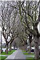 O1637 : Griffith Avenue, Glasnevin, Dublin, Ireland by Peter Gerken