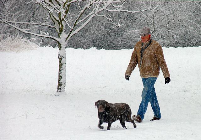 Dog Walking in Snowy Woolhampton
