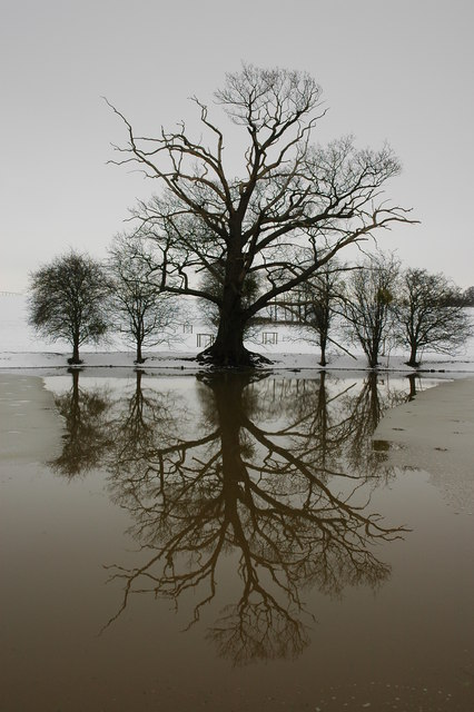 Winter trees mirrored in Croome River