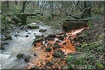 NZ7118 : Waytail Beck, Whitecliff Wood by Mick Garratt