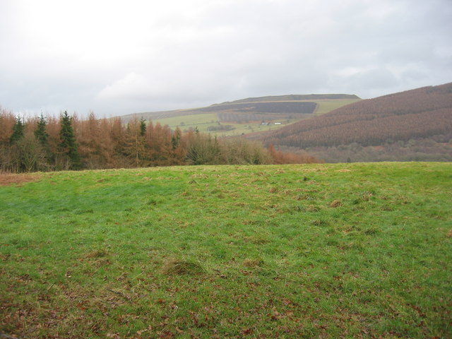 Field next to the forest
