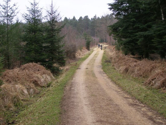 Cycle path in Anderwood Inclosure, New Forest