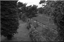 J2564 : Knockmore Halt by Wilson Adams
