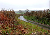 SX3257 : Wet Single Track Road leading down to A387 by BB