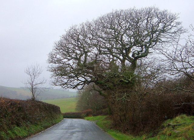 Brain-Shaped Tree