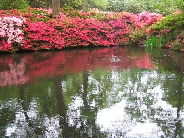 Still Pond, Isabella Plantation, Richmond Park