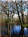 TQ8017 : Pond, Shirke Shaw by Simon Carey